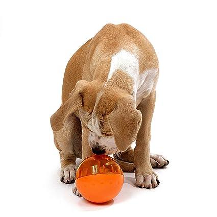 Wellness Toy Breed Senior Dog Food Wow Blog