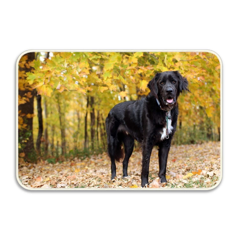 Amazon Com Wyiou Welcome Doormat Animal Dogs Entrance Floor Mat