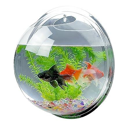 Jarrón/pecera colgante de acrílico de Candora, burbuja ideal como maceta para plantas o