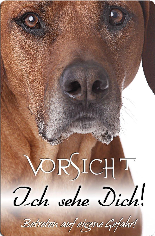 ++ RHODESIAN RIDGEBACK Metall WARNSCHILD Schild Hundeschild Sign RRB 31 T12