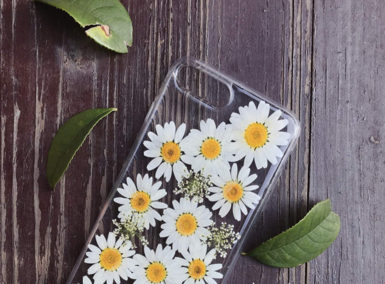 YW iPhone 7 Plus Case and iPhone 8 Plus Case (5.5 inch), Fresh Daisy Real Flower Phone Cover, Shock-Absorption Bumper Cover, Anti-Scratch Clear Back White (iPhone 7/8 Plus)