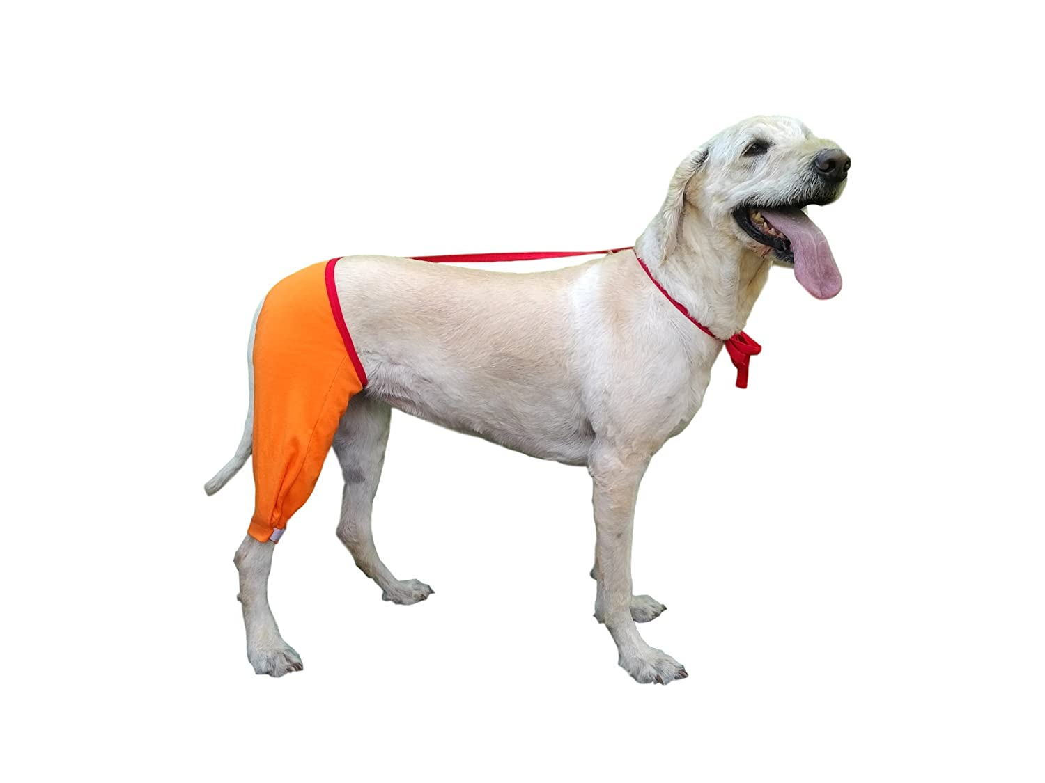 Amazon hip and thigh wound protective sleeve for dogs dog amazon hip and thigh wound protective sleeve for dogs dog recovery sleeve recommended by vets worldwide x small orange pet supplies pooptronica Images
