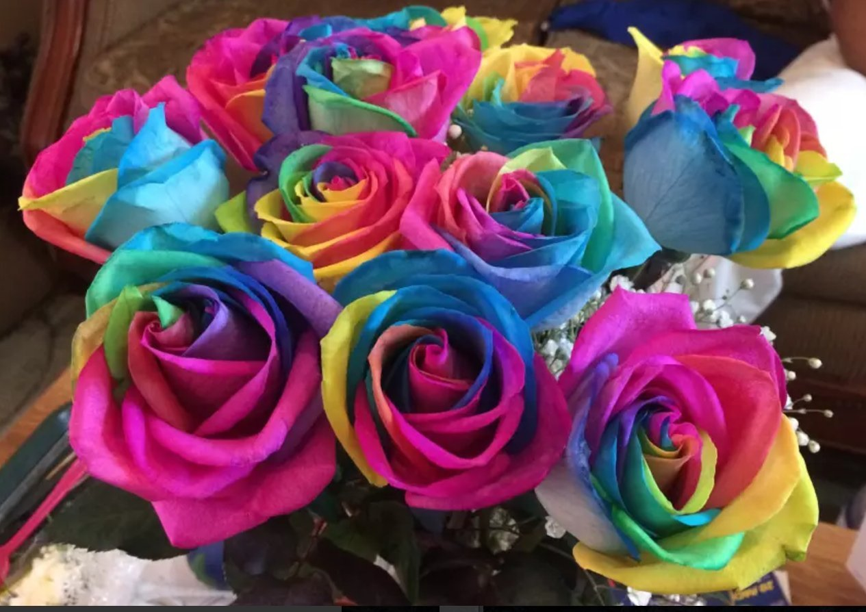 Amazon.com : Flowers - One Dozen Wild Rainbow Roses (Free Vase ...