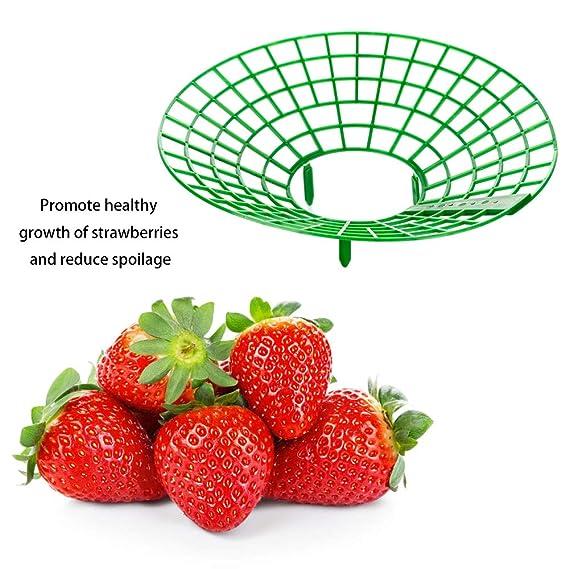 Soportes de fresa de 6 piezas, soporte para maceta con 3 patas ...