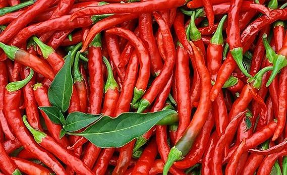 Amazon.com: Chaotian Chili semillas 5 G, el más Hot Chili en ...