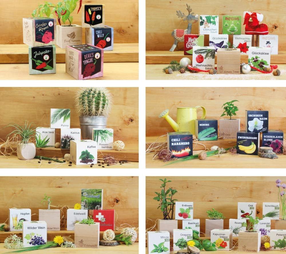 Fabricado en Austria Idea de Regalo sostenible Grow Your Own//Anzuchtset 100/% Eco Friendly Plantas en Cubos de Madera Feel Green Ecocube Riesenbambus
