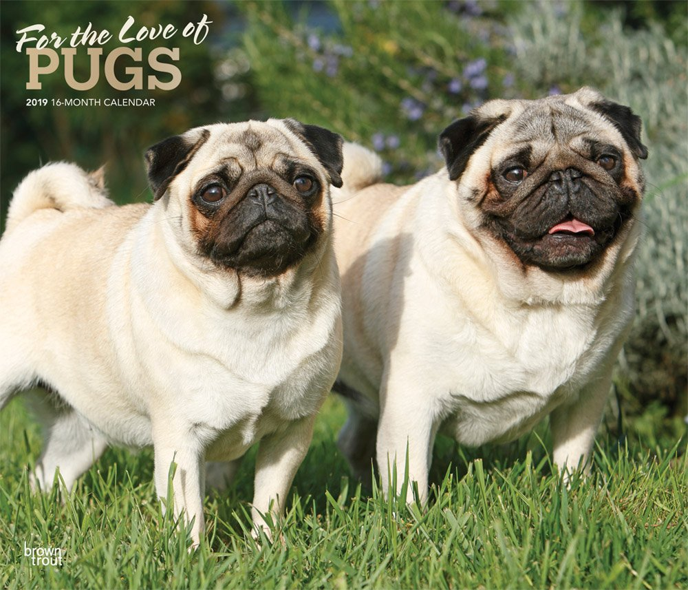 For the Love of Pugs 2019 14 x 12 Inch Monthly Deluxe Wall Calendar with Foil Stamped Cover, Animals Dog Breeds (English, French and Spanish Edition) pdf
