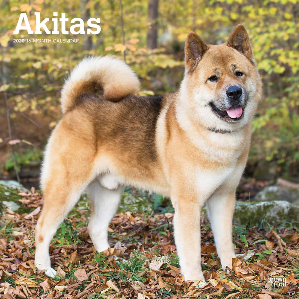 Akitas 2020 12 X 12 Inch Monthly Square Wall Calendar Animals Dog Breeds English Spanish And French Edition Browntrout Publishers Inc Browntrout Publishers Editing Team Browntrout Publishers Design Team Browntrout Publishers Design