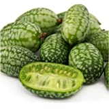 """Package of 65 Seeds, """"Mexican Sour Gherkin"""" Cucamelon / Miniature Watermelon (Melothria scobra) Non-GMO Seeds by Seed Needs"""