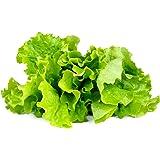 Click & Grow Smart Garden Refill Capsules   Green Lettuce 3-pack