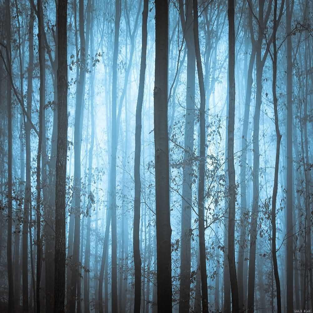 Quiet Dark Forest 10' x 10' Digital Printed Photography Backdrop KA Series Background KA121
