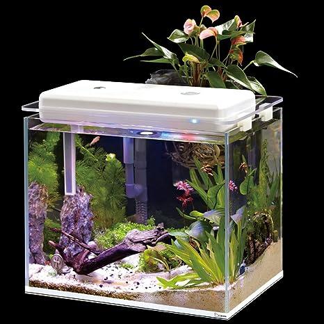 hoison 4 L Smart Eco Acuario con sistema de filtro para peces ornamentales o Dwarf de
