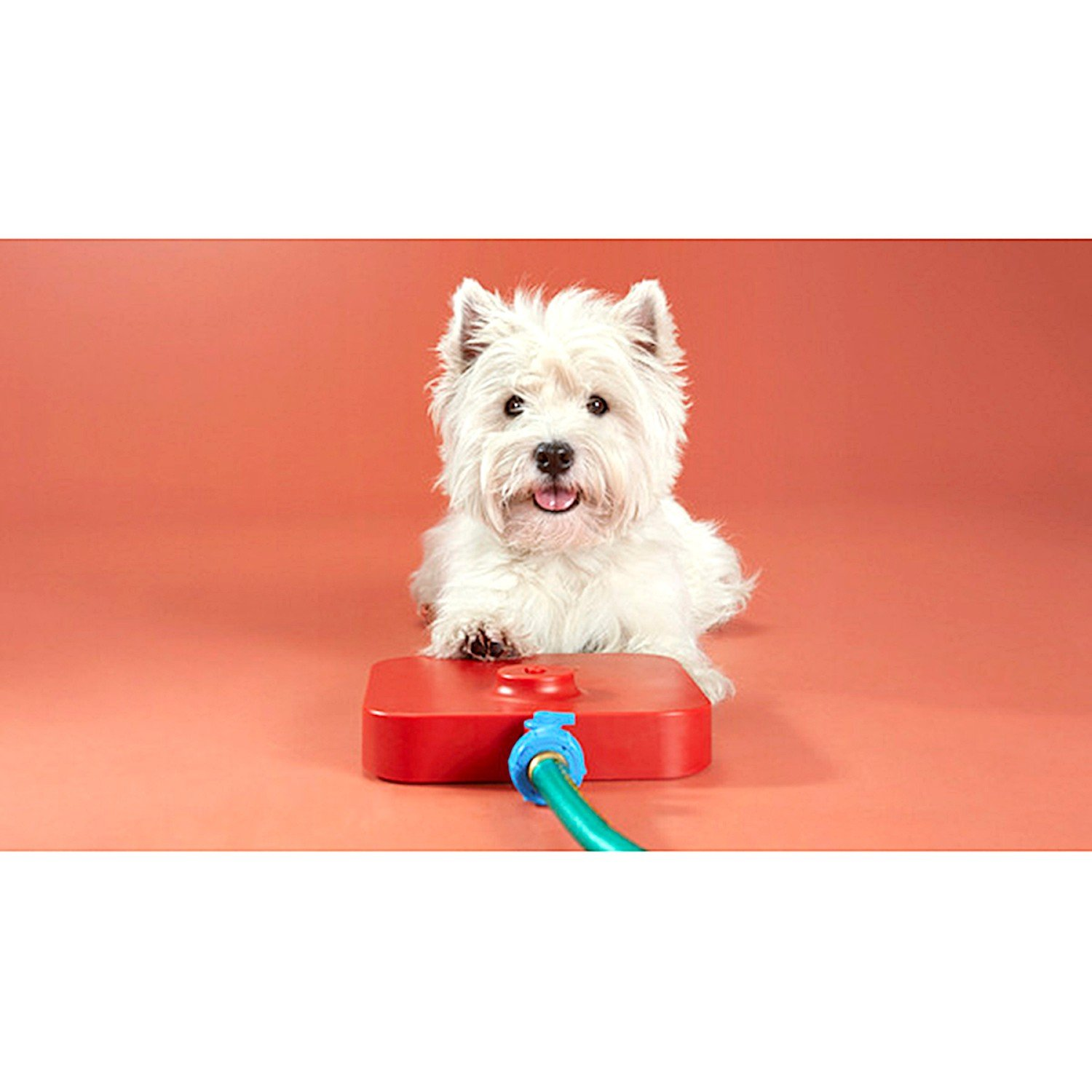 Quirky Viatek Pawcet Pet Fountain -Pressure Pedal Activated Pet Waterer for Dogs & Cats