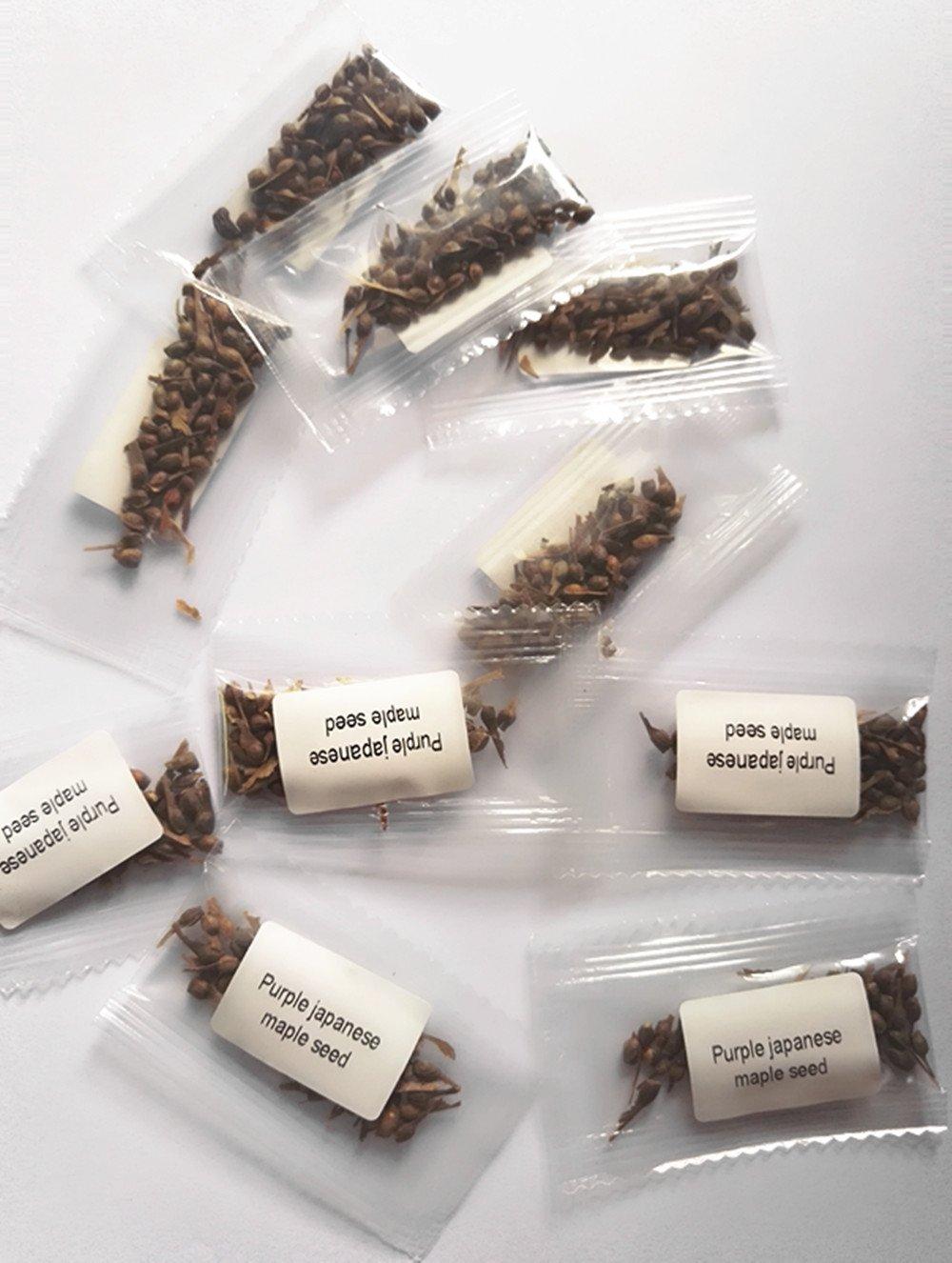 amazon com trees plants seeds u0026 bulbs patio lawn u0026 garden
