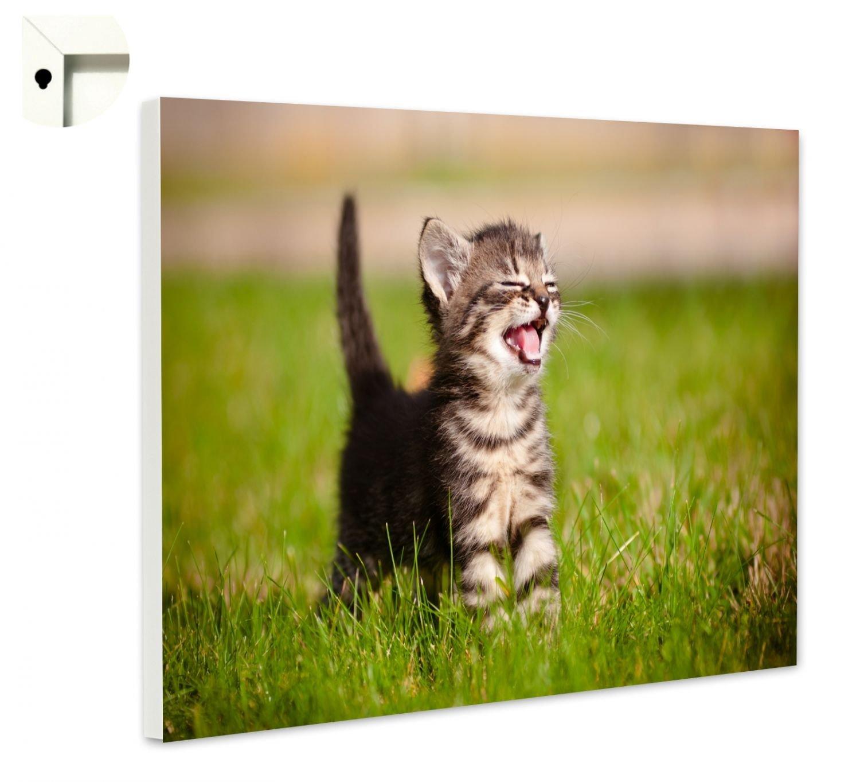 B-wie-Bilder  Magnettafel Pinnwand Memoboard Memoboard Memoboard Motiv Tiere Baby Katze MIAU Größe 60 x 40 cm d6e794