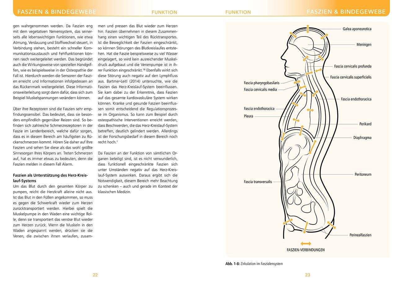 Berühmt Thorax Oberflächenanatomie Bilder - Anatomie Ideen - finotti ...