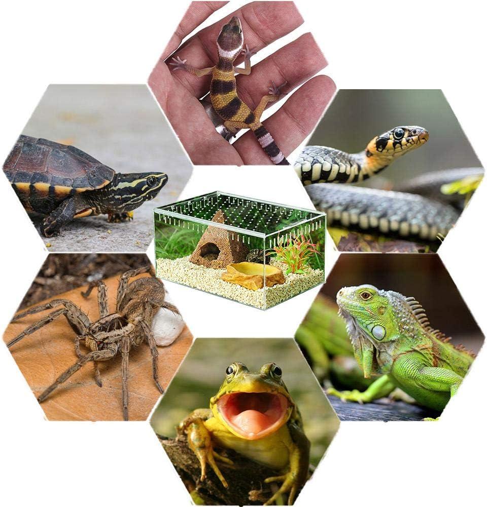 domiluoyoyo Reptil Transparente Caja de cr/ía Terrario peque/ño de acr/ílico Vista Completa Caja de alimentaci/ón para Reptiles de Insectos Tar/ántulas Anfibios Orugas Grillo Ara/ña Caracol Reptil