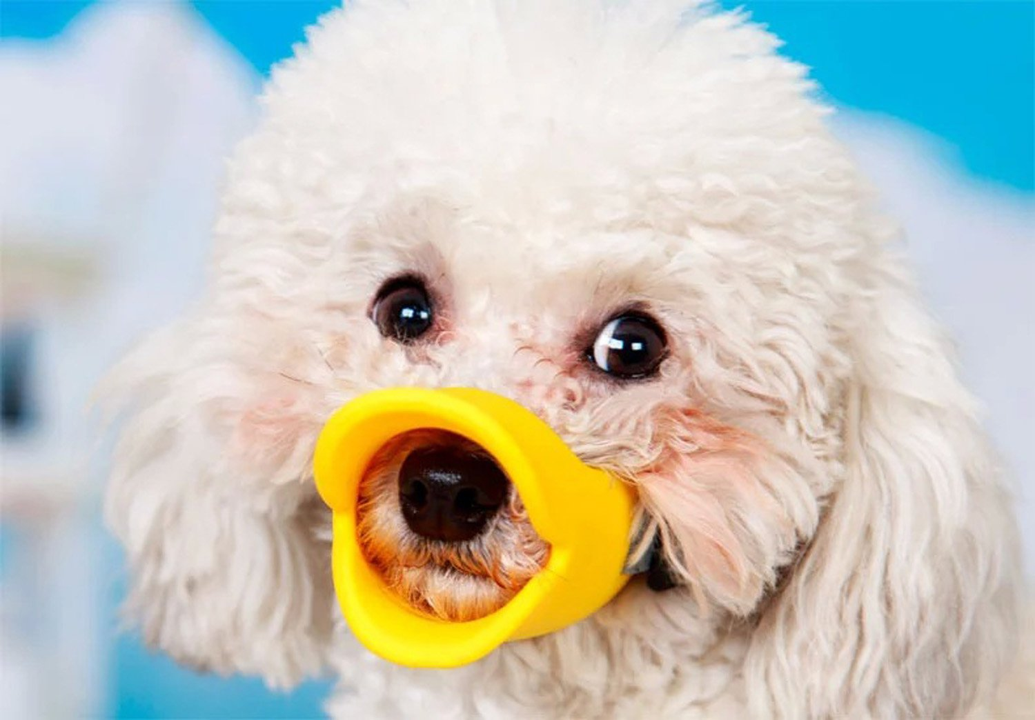 Super Cute Pet Muzzle Anti Bite Dog Mussel Duck Mouth Shape Dog Mouth Covers Dog Muzzles (M, yellow)