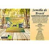 Semilla de Brazil/Brasil Seed 100% Original/Fat Burner/Original Stamps/