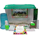 LIVE Frog Growing Kit 2 Tadpoles: Free Mail-In CERTIFICATE for Tadpoles Later