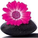 Eurographics DG-DT2083 - Cristal con póster decorativo (20 x 20 cm), diseño de piedra zen con flor rosa
