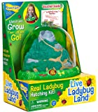 Insect Lore Ladybug Growing Kit Toy - Includes Voucher Coupon for Baby Ladybug Larave to Adult Ladybugs - SHIP LATER