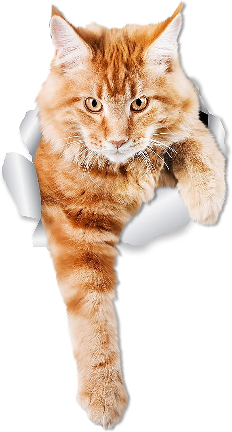 Winston & Bear Climbing Ginger Cat Wall Decals - 2 Pack - Orange Cat Toilet Sticker – 3D Cat Car Window and Bumper Sticker - Retail Packaged Orange Cat Lover Gifts