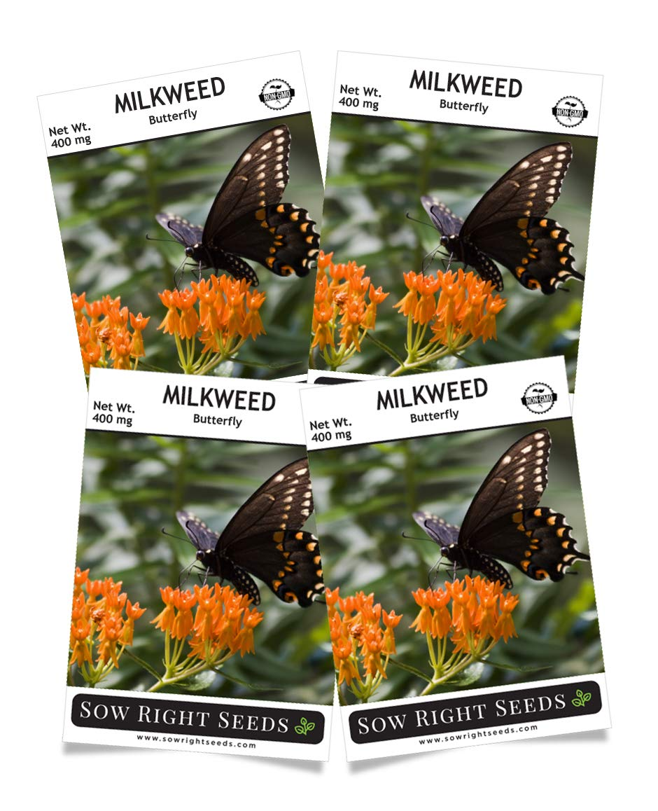 Sow Right Seeds Butterfly Milkweed Seeds; Attract Monarch and Other Butterflies to Your Garden; Non-GMO Heirloom Seeds; Full Instructions for Planting, Wonderful Gardening Gift (4) by Sow Right Seeds