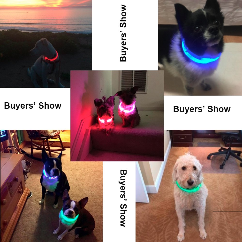 BSeen LED Dog Collar, Glow in the Dark USB Rechargeable Pet Collars, High Visible Light up TPU Light-guiding Dog Safety Collars for Small Medium Large Dogs (Red)