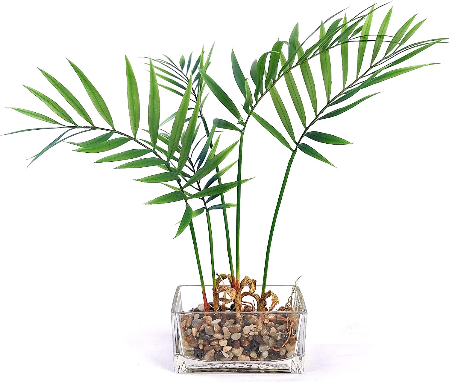 Homsunny Artificial Plants in Glass Vase, Artificial Flowers with Vase Centerpieces Home Decor for Tables, Fake Tabletop Greenery w/Clear Glass Pots (Bamboo)