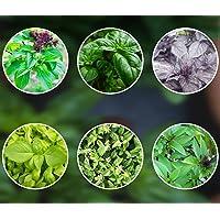 Mezcla de albahaca 6 x 250 semillas de albahaca durante todo el año, plantadas de semillas de Portugal perennes