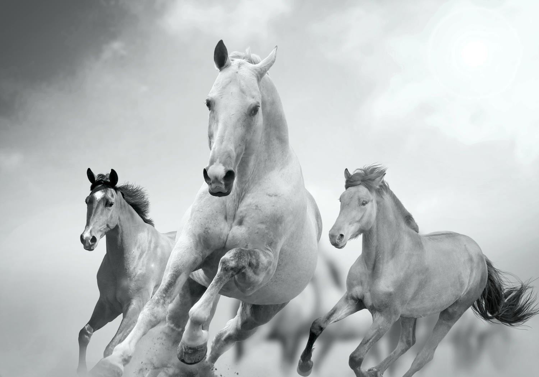 Fototapete Pferde laufen in Weiß und Schwarz XL 350 x 245 cm - 7 Teile Vlies Tapete Wandtapete - Moderne Vliestapete - Wandbilder - Design Wanddeko - Wand Dekoration wandmotiv24