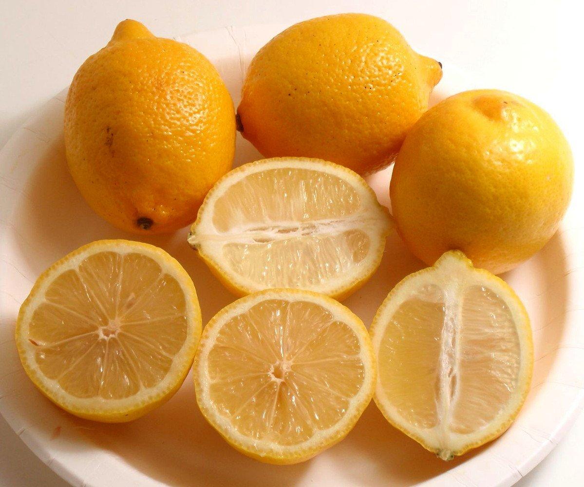 Four Seasons Eureka Lemon Tree - 8'' Pot - NO SHIPPING TO TX, FL, AZ, CA, LA, HI