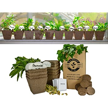 Mr. Sprout U0026 Co DIY Gardening Kit   Complete Medicinal And Culinary Herb  Garden Kit   Includes Basil, Parsley, Cilantro, Mint, Chives, Sage, Thyme,  Catnip, ...