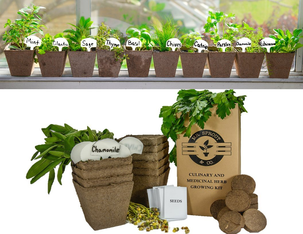 Mr. Sprout & Co DIY Gardening Kit - Complete Medicinal and Culinary Herb Garden Kit - Includes Basil, Parsley, Cilantro, Mint, Chives, Sage, Thyme, Catnip, Chamomile, and Echinacea