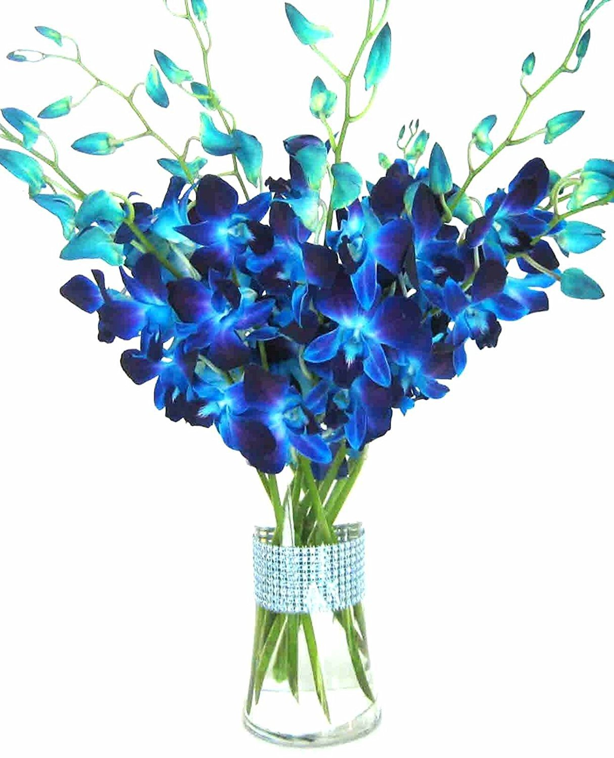 eflowerwholesale - Premium Cut Blue Orchids (10 stems Orchid with Rhinestone Mesh Ribbon Vase) by eflowerwholesale