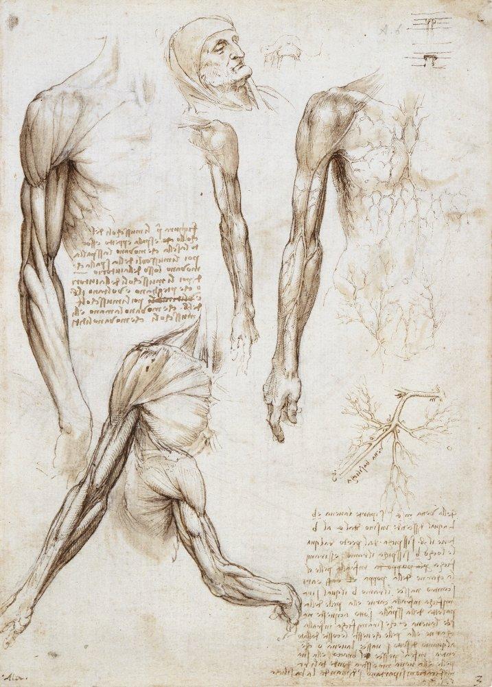 Vintage Anatomie LEONARDO da VINCI Écorché, Italien, 14-15 ...