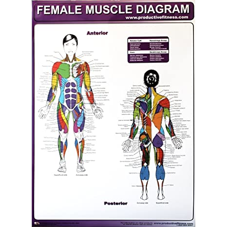 Amazon Com Productive Fitness Poster Series Female Muscle Diagrams