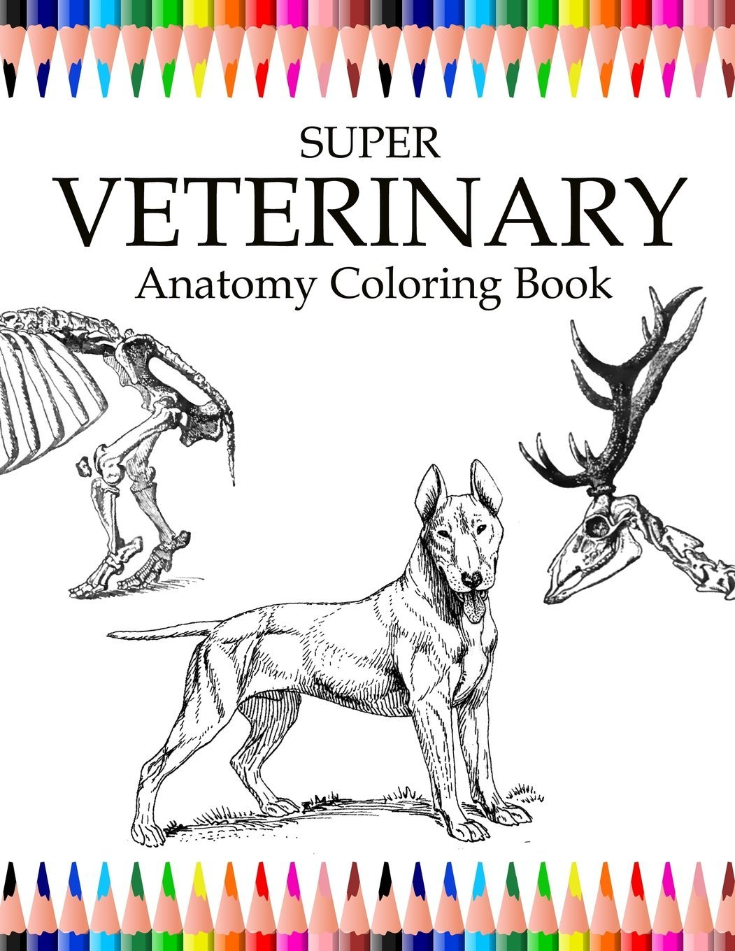 Amazon Com Super Veterinary Anatomy Coloring Book Animals For