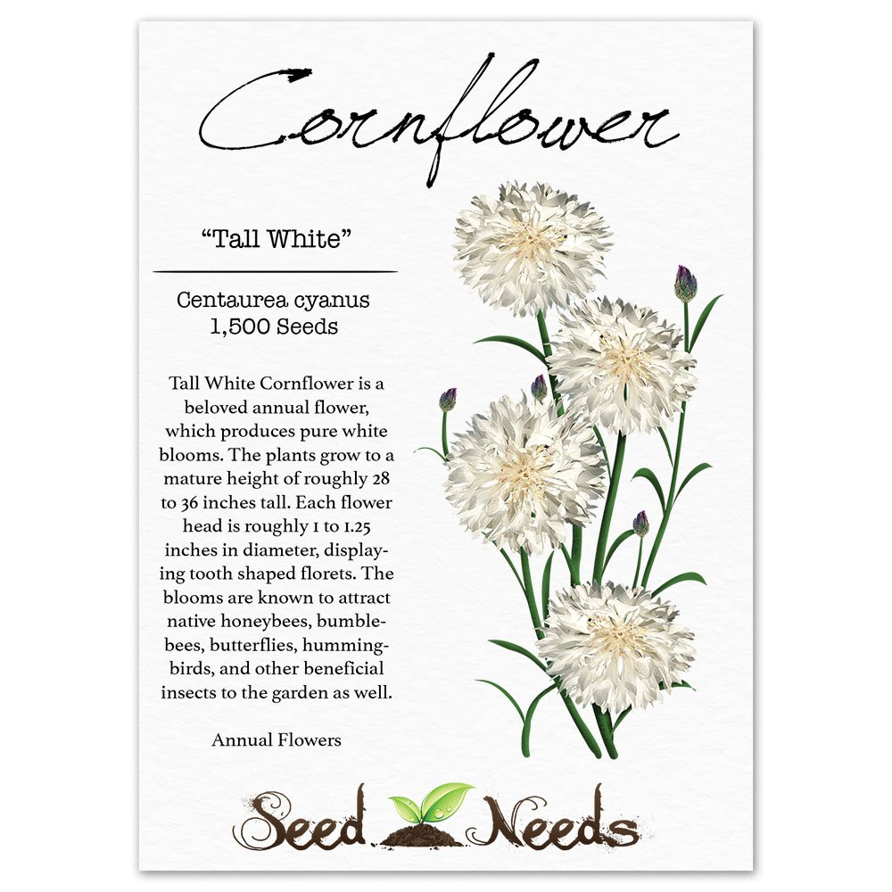 Amazon Package Of 1 500 Seeds Tall White Cornflower