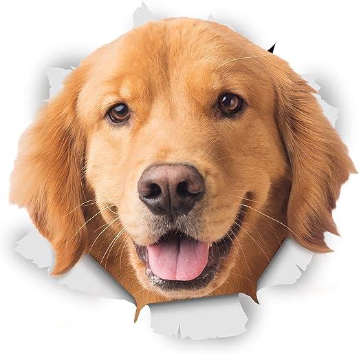 Winston & Bear Perro 3D pegatinas - Pack 2 - feliz Golden ...