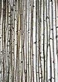 "Decorative Birch Poles 4ft (4 Poles 1 1/2""-2 1/2"" dia.)"