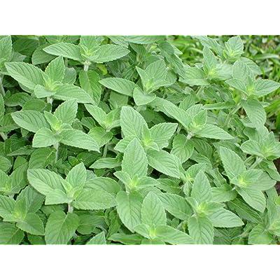 Cutdek Herb, 32 Varieties Medicinal and Spice Seeds Lemon Mint 50 Seed : Garden & Outdoor
