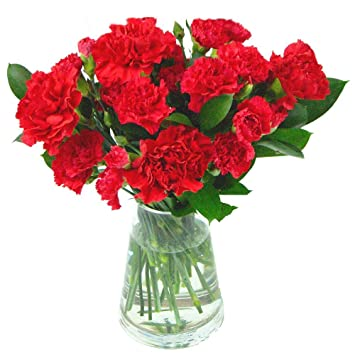 Clare Florist Red Carnations Fresh Flower Bouquet Fresh Red