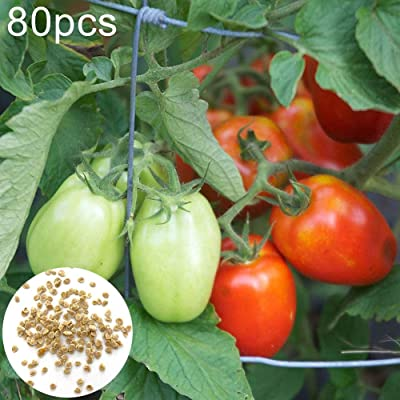 Gaweb Easy to Plant,80Pcs Tomato Seeds Home Garden Yard Delicious Nutritious Vegetable Plant Tomato Seeds 80pcs: Home & Kitchen