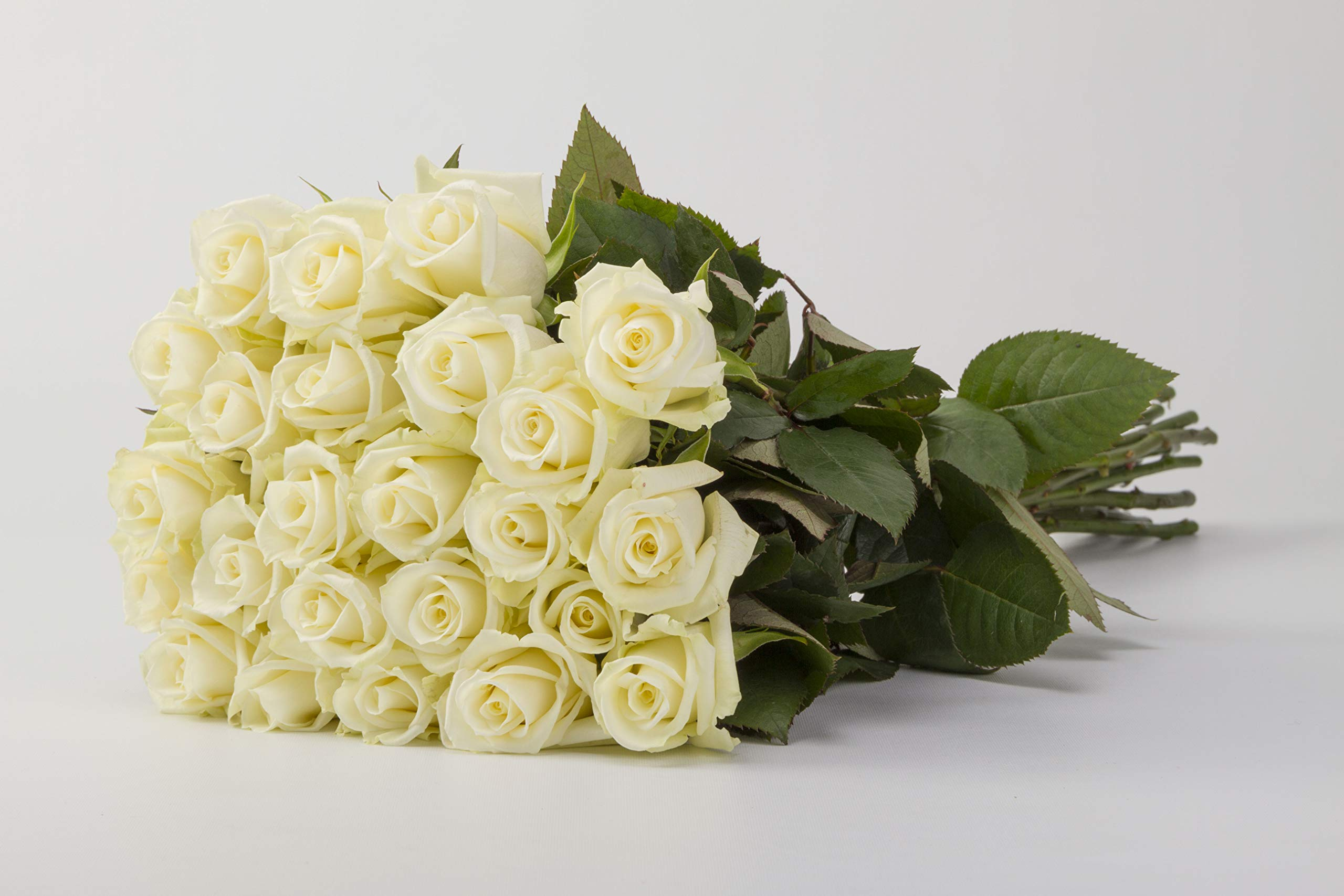 Martha Stewart Roses by BloomsyBox - Two Dozen Perfect Escimo White Roses Selected by Martha and Hand-Tied, Long Vase Life