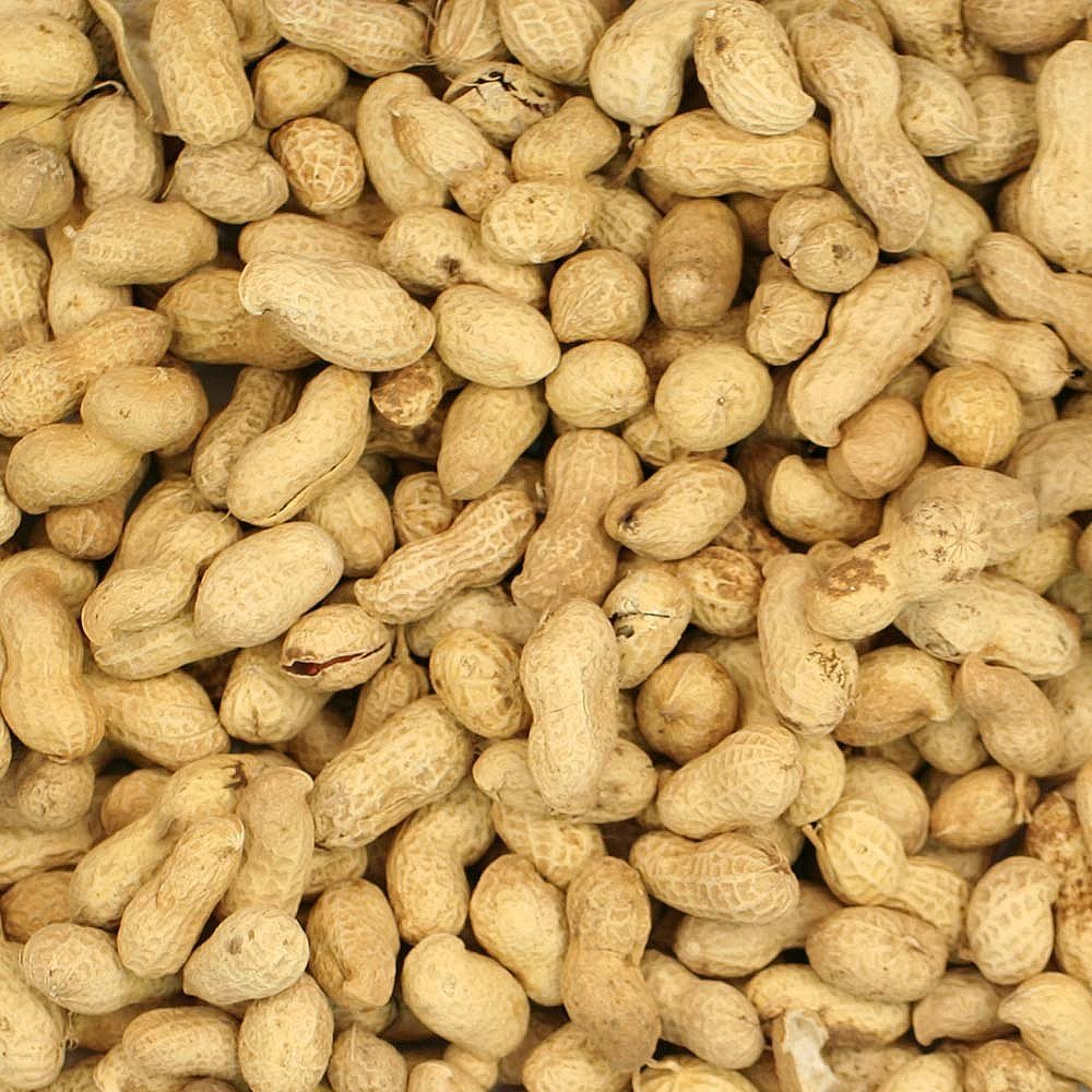 MALTBY'S STORES 5KG PEANUTS IN SHELLS MONKEY NUTS WILD BIRD FOOD MALTBY' S CORN STORES