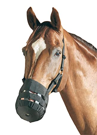 best dating grazing muzzle horses recommended