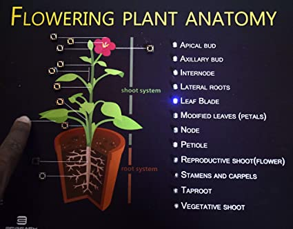 Buy Puzzle Perplex Slate Plant Flower Anatomy For Kids Visual
