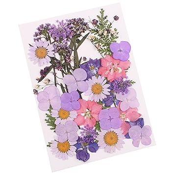 12 Stück Natürliche Gepresste Blume Verzierungen Trockenblumen getrocknete